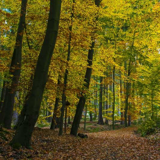 Fall Colors in West Bohemia, Czech Republic